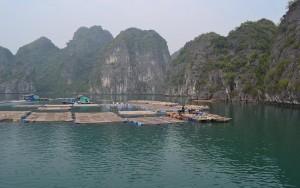 Fishing village in Lan Ha Bay via halong ay cruise