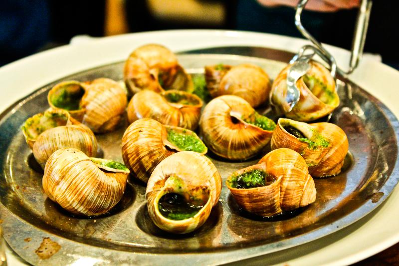 Snail in Halong bay